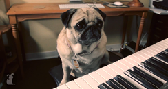 thrift shop cover by dogs