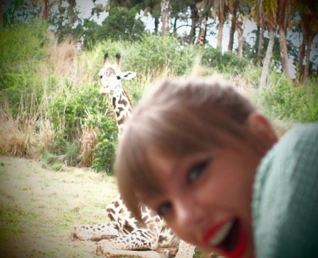 Taylor Swift visits a wildlife park