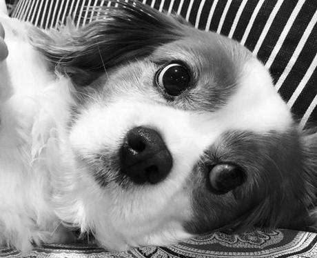 Charlie Puth's dog Brady